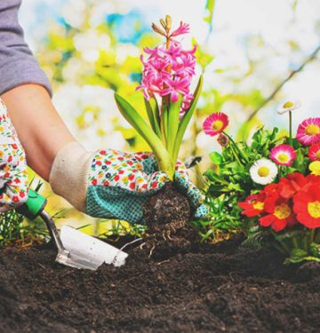 Can Gardening Help With Anxiety?